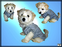 Terry clothes for dog