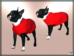 Woolen sweater for dog